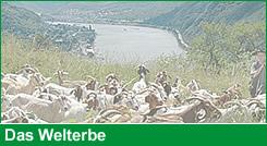 Hier erfahren Sie mehr über das Welterbe im Oberen Mittelrheintal